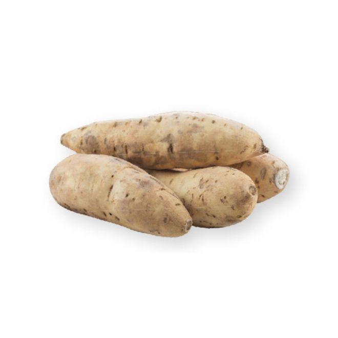 novità 2021 orto per vivai - Batata gialla - patata dolce americana - vaso 14
