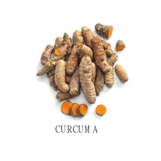 Piantine aromatiche in vaso all'ingrosso - Curcuma
