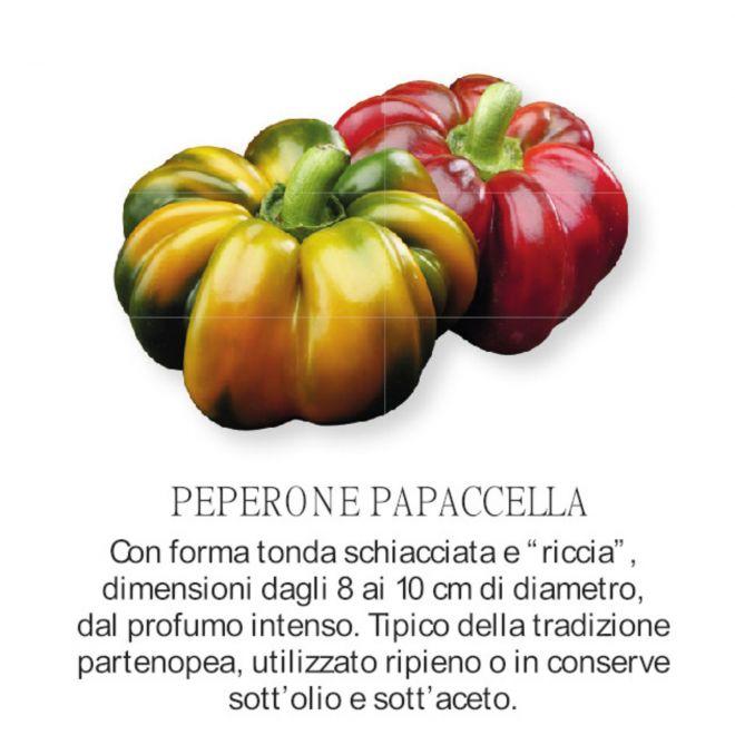 novità 2021 orto per vivai  - Peperone Papaccella - piantine all'ingrosso