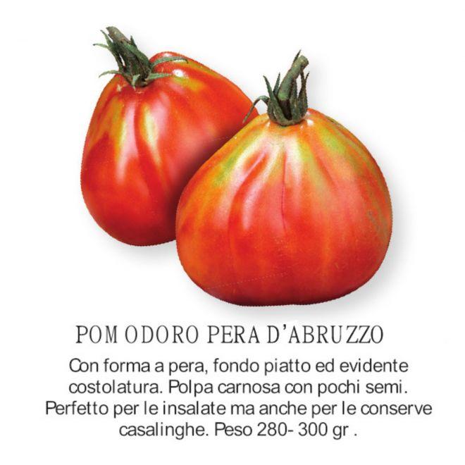 Pomodoro pera d'Abruzzo - novità 2021 orto per vivai  all'ingrosso