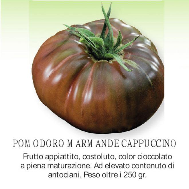 novità 2021 orto per vivai - Pomodoro Marmade Cappuccio - piantine in pack all'ingrosso