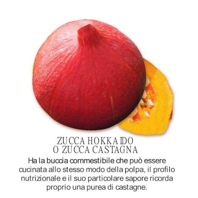 novità 2021 orto per vivai  - Zucca Hokkaido - Zucca Castagna - Piantine in pack all'ingrosso